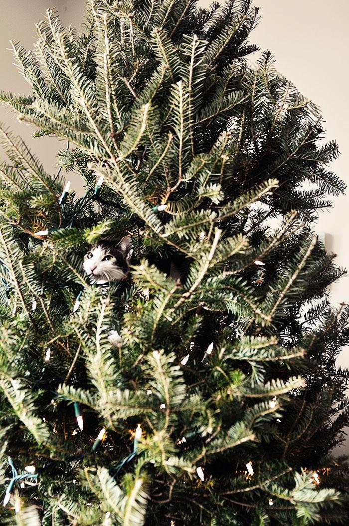 Chum tree