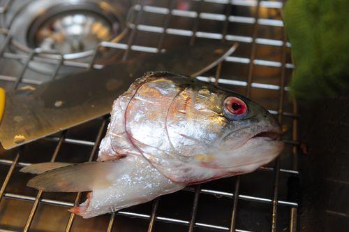 Photog and fish 097