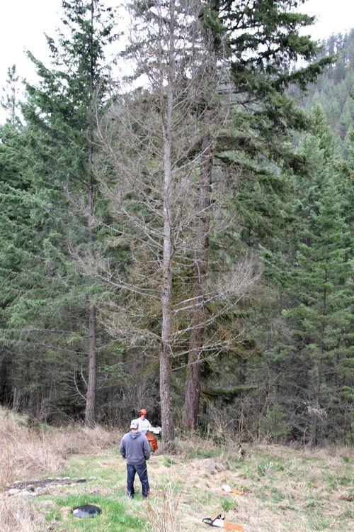 Tree cut