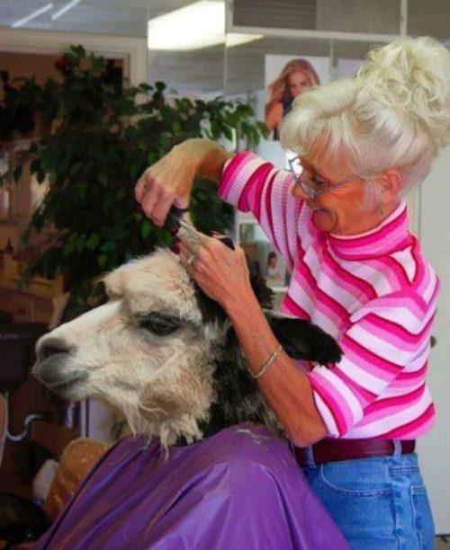 Lamma haircut
