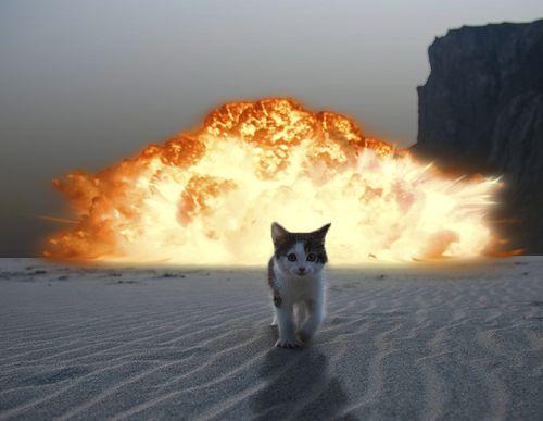 Cat bomb