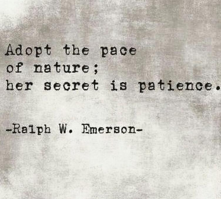 Nature patience